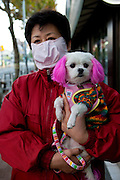 Daegu/Republic of Korea, South Korea, KOR, 14.11.2009: Woman holding her dog and  wearing a face mask as prevention against the swine flu virus.