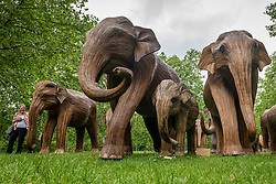 © Licensed to London News Pictures. 17/06/2021. LONDON, UK. A woman walks by some of the 100 wooden elephants on display in Green Park, part of the CoExistence herd.  Handcrafted from a natural plant material called Lantana camara, the wooden elephants are currently on an installation tour of the UK to highlight a crowded planet and human encroachment on wild places.   Photo credit: Stephen Chung/LNP
