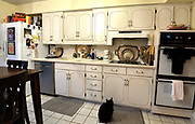 """Another view of the kitchen with cat relaxing. Photo taken on January 8, 2019 for """"At Home"""" feature on Sandy Stolberg,  who uses dollar store finds as part of the decorations in her Belleville, IL condo.<br /> Photo by Tim Vizer"""