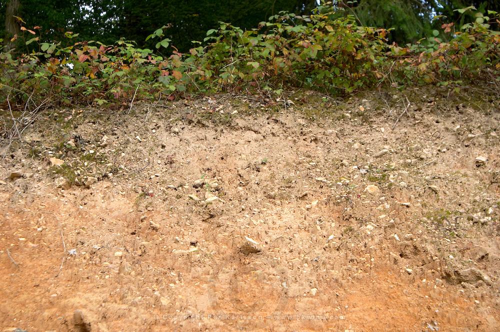 Soil detail. Sand. Calcareous. Chateau de Tracy, Pouilly sur Loire, France