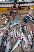 A Sri Lankan fishermen guts fish in the village of Mirissa, January 5, 2005.