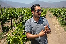 Guide, Emiliana Organic Vineyards