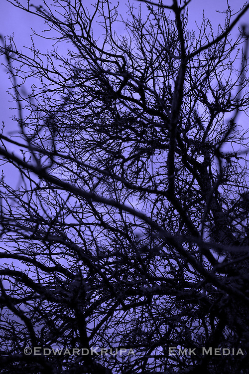 Abstract or tree branches in twilight. Lavender.
