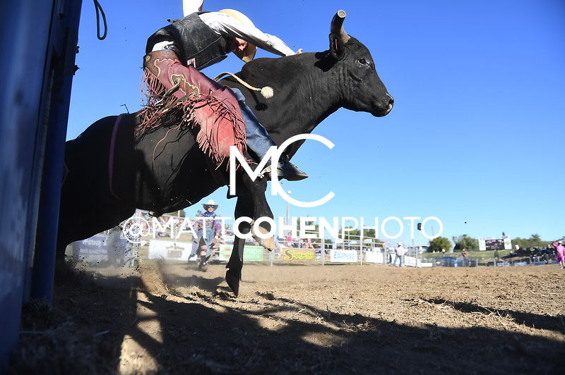 Dylan Vick Hice / 1241/4 Bring on the Buck of Flying U, Marysville 2018<br /> <br /> <br /> UNEDITED LOW-RES PREVIEW<br /> <br /> <br /> File shown may be an unedited low resolution version used as a proof only. All prints are 100% guaranteed for quality. Sizes 8x10+ come with a version for personal social media. I am currently not selling downloads for commercial/brand use.