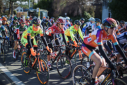 The peloton rides together in the early part of the 2015 Omloop Het Niewsblaad Dames race.