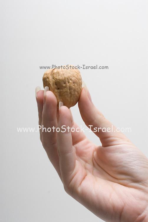 Female hand holding a whole Walnut on white background