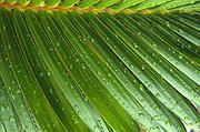 Palm Branch<br />