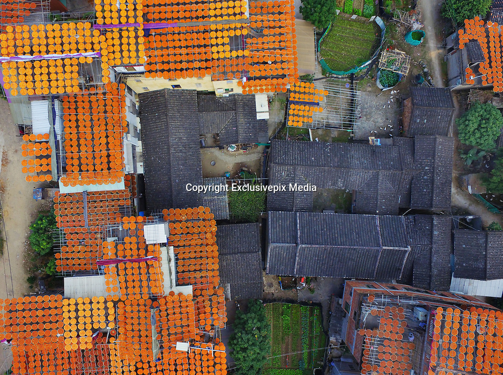 QUANZHOU, CHINA - <br /> <br /> Amazing Aerial view of persimmons fruit drying on the roof tops<br /> <br /> A villager dries persimmons in the yard  in Quanzhou, Fujian Province of China. Persimmons are peeled and further dried by exposure to heat over several days before being shipped to market as hoshigaki, which is also called Shibing in Chinese.<br /> ©Exclusivepix Media