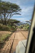 Scenic landscape with view of acacia trees and a dirt road seen from a safari car, Lake Manyara National Park, Tanzania
