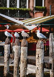 THEMENBILD - Möwen sitzen auf Holzpfahle, aufgenommen am 05. Oktober 2019 in Venedig, Italien // Seagulls sit on wooden posts, in Venice, Italy on 2019/10/05. EXPA Pictures © 2019, PhotoCredit: EXPA/Stefanie Oberhauser