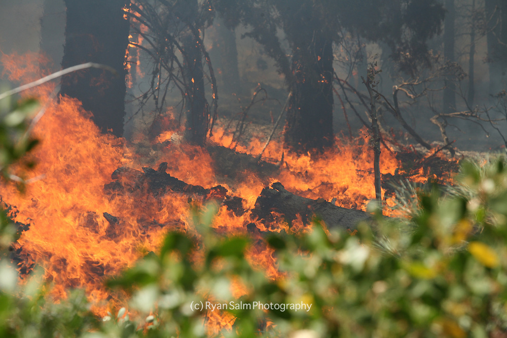 Snapshot of life and death in a burning  forest.