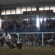 THE PHILIPPINES (Manila). 2009. Two game cocks, each with three inch razor sharp blades fastened to their left ankles fight to the death at the Makati Coliseum as the referee and the crown watch at Makati City, Manila. Photo Tim Clayton <br /> <br /> Cockfighting, or Sabong as it is know in the Philippines is big business, a multi billion dollar industry, overshadowing Basketball as the number one sport in the country. It is estimated over 5 million Roosters will fight in the smalltime pits and full-blown arenas in a calendar year. TV stations are devoted to the sport where fights can be seen every night of the week while The Philippine economy benefits by more than $1 billion a year from breeding farms employment, selling feed and drugs and of course betting on the fights...As one of the worlds oldest spectator sports dating back 6000 years in Persia (now Iran) and first mentioned in fourth century Greek Texts. It is still practiced in many countries today, particularly in south and Central America and parts of Asia. Cockfighting is now illegal in the USA after Louisiana becoming the final state to outlaw cockfighting in August this year. This has led to an influx of American breeders into the Philippines with these breeders supplying most of the best fighting cocks, with prices for quality blood lines selling from PHP 8000 pesos (US $160) to as high as PHP 120,000 Pesos (US $2400)..