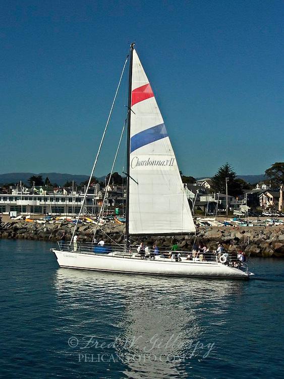 Chardonnay II ~ Santa Cruz ~ 0459