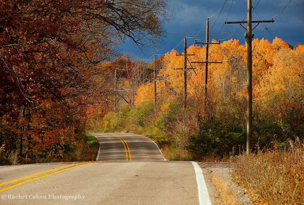 """""""Winding Roads of Gold""""<br /> <br /> Enjoy the pure wonder of following winding rural roads in autumn surrounded by golden foliage!!<br /> <br /> Autumn Landscapes by Rachel Cohen"""