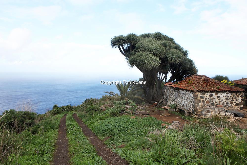 old house on la palma