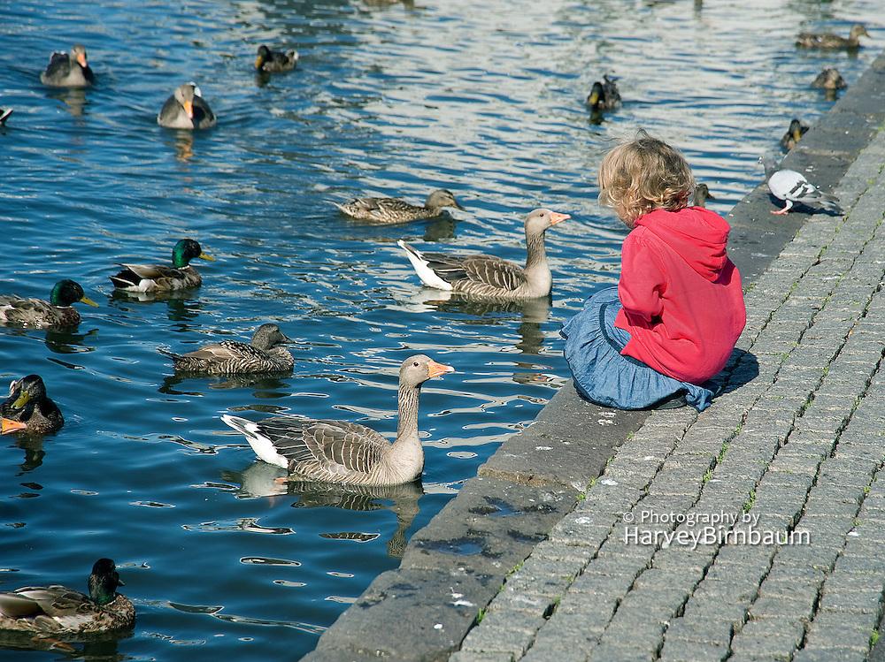 Town Pond birds Reykjavik Iceland 6_15_09