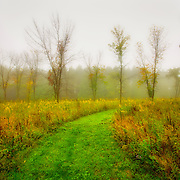Photo while hiking through Retzer Nature Center in Waukesha on a foggy fall morning.