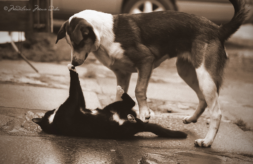 Cat and Dog playing together - a true friendship
