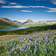 summer wild flowers, two med lake and sinopah, crown of the continent, glacier national park, monana, usa