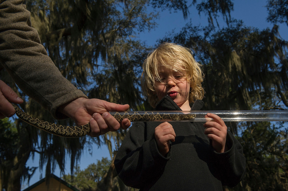 Eastern Diamondback Rattlesnake (Crotalus adamanteus) tubed<br /> Little St Simon's Island, Barrier Islands, Georgia<br /> USA<br /> RANGE: Southeastern United States.<br /> Venomous pitviper.<br /> It is the heaviest venomous snake in the Americas and the largest rattlesnake.