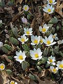 Spring Flowers 2018