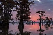 Sunrise in Henderson Swamp