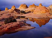 Wind-sculpted beehives reflected in ephemeral slickrock pool, Vermilion Cliffs National Monument, Paria-Vermilion Cliffs Wilderness, Arizona.