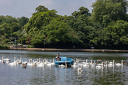 Licensed to London News Pictures. 02/07/2021. London, UK. Swans flock to a pedal boat on the Serpentine as members of the public enjoy the warm sunshine this morning in Hyde Park, London with highs of 25c today. However, weather forecasters predict showers for the next 5 days with temperatures down to 18c for London and the South East as the unpredictable British weather continues. Photo credit: Alex Lentati/LNP