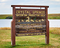 Crystal Springs Waterfowl Production Area. Image taken with a Nikon D700 camera and 80-400 mm VR lens.