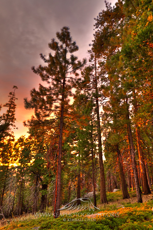 A red sunset glow on the forest in Yosemite National Park