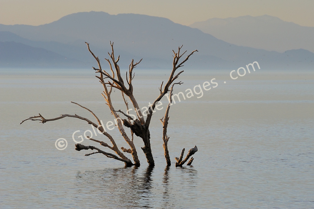 A few long dead oak trees still stand in the brackish water likely preserved by the extremely high salt content. <br /> <br /> The Salton Sea continues to shrink due to evaporation. The water which is left is ever more saline.