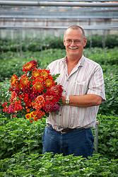 Chrysanthemum grower