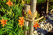 Tiger lilies by gatepost at a restaurant with fish boil.  Door County Wisconsin USA