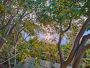 Greystone. Mustique, St. Vincent & The Grenadines