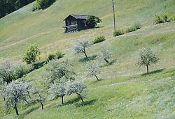 THEMENBILD - blühende Obstbäume und eine Heustadl auf einer Bergwiese, aufgenommen am 08. Mai 2020, Bramberg, Österreich // flowering fruit trees and a hay barn on a mountain meadow on 2020/05/08, Bramberg, Austria. EXPA Pictures © 2020, PhotoCredit: EXPA/ Stefanie Oberhauser