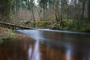 Long exposure of river Loja and forest around it showing its dark brown waters with several fallen spruces in it, Murjāņi, Gauja National Park (Gaujas Nacionālais parks), Latvia Ⓒ Davis Ulands   davisulands.com