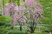 Central Park in Bloom
