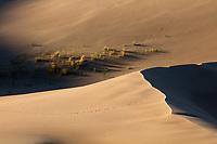http://Duncan.co/animal-track-on-sand-dune