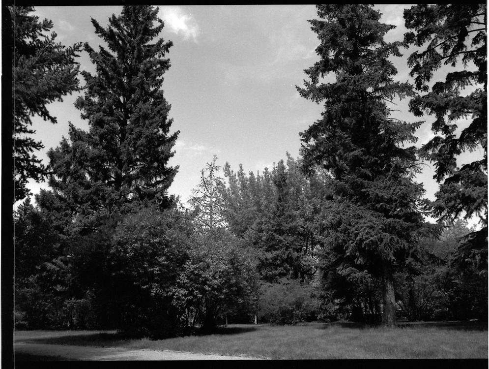 Buena Vista Park, Saskatoon, Saskatchewan. Rollei Infrared 400 120mm, 2017-05-20, no filter, 1/125 @ f/16.