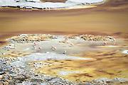 Flamingos in the water at Pujsa Salt Lake, Atacama Desert. Chile, South America