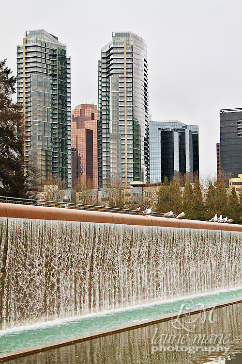 Bellevue, WA Downtown Park waterfall with sea gulls and the Bellevue Towers skyline