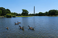 WASHINGTON - JUNE 30, 2019: The Washington Monument is seen from the Constitution Gardens on June 30, 2019, in Washington, D.C.