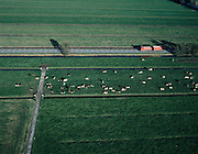 Nederland, Zuid-Holland, Alblasserwaard, 17-10-2003; luchtfoto (25% toeslag); polder Ottoland (tussen Gorinchem en Schoonhoven), op de provinciale weg een oplegger combinatie met containers voor landbouw producten, in de wei grazende melkkoeien; melkvee, weiland, gras, landbouw; waterhuishouding, sloten, verkaveling, vervoer, infrastuctuur, verkeer; landschap  ..Foto Siebe Swart