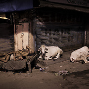 In anticipation of the coming relieving monsoon, two brothers sleep outside next to two sacred cows in the smothering heat of Paharganj, New Delhi.