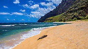 Endangered Hawaiian monk seal (Monachus schauinslandi) on Miloli'i Beach, Na Pali Coast, Island of Kauai, Hawaii