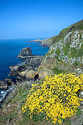 Les Autelets stacks and dramatic coastal scenery west coast of Sark Island, Channel Islands, Great Brit