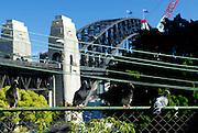 Pigeons perched on a fence, Sydney Harbour Bridge in background. Sydney, Australia