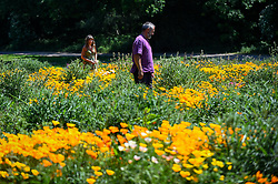 © Licensed to London News Pictures. 30/05/2020. WATFORD, UK.  Visitors view California poppies (Eschscholzia californica) currently flowering on a sunny day in a field in Watford.  The UK has experienced the sunniest spring since records began in 1929 including the driest May in some areas.  Photo credit: Stephen Chung/LNP