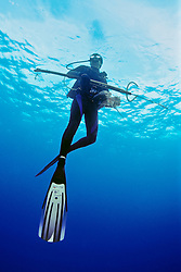 spearfisherman with good catches, off Tampa, Florida, USA, Gulf of Mexico, Caribbean Sea,  Atlantic Ocean, Model Released - MR#: 000014
