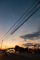 Swallows gather on the powerlines in the evening.  Cost Rica